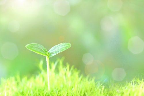 新緑の芽生え